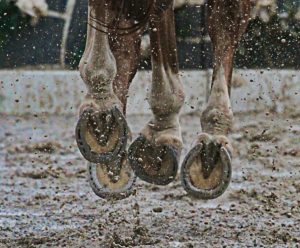 hooves in mud